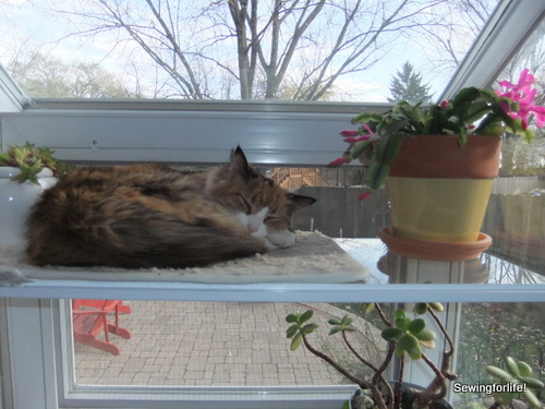Chloe with christmas cactus in window